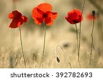 beautiful poppies in spring... | Shutterstock . vector #392782693