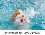 two beagle dog dumping in to... | Shutterstock . vector #393019603