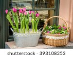 ������, ������: Two bouquet of tulips
