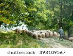 A Flock Of Sheep In The Pastur...
