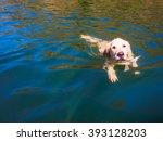 Golden Retriever Swimming In A...