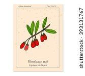 goji berry  lycium barbarum  or ... | Shutterstock .eps vector #393131767