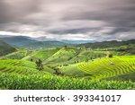 Terraced Rice Fields In...