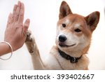 Cute Japanese Dog Give Hi Five...