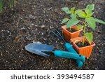 vegetables ready to be plant in ...   Shutterstock . vector #393494587