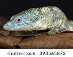 Small photo of Mixtecan arboreal alligator lizard (Abronia mixteca)