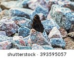 Black Butterfly Sitting On A...
