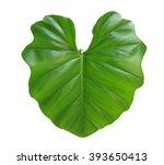 Taro Leaf Isolated On White...