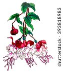 Pink Red Fuchsia Flower In...