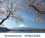 cherry blossom sakura and... | Shutterstock . vector #393823483