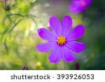 Beautiful Violet Flower On...