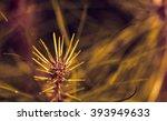 leaf tip pine seedling with... | Shutterstock . vector #393949633