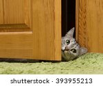 Stock photo naughty cat playing at home looking through the door cat looking right funny pet at home cat 393955213