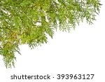 thuja twig with flowers on a
