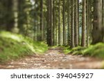 Stock photo forest hiker path between evergreen pine tree trunks and leaves details in pine forest 394045927