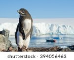 Small photo of Young Adelie penguin standing on the rock, with blue sky, sea and iceberg in background, Antarctic Peninsula