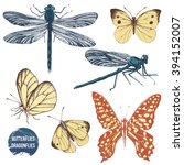 hand drawn dragonflies and... | Shutterstock .eps vector #394152007
