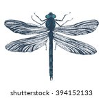 Hand Drawn Dragonfly On White...