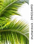 palm sunday background with... | Shutterstock . vector #394314493