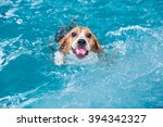 young beagle dog playing toy in ... | Shutterstock . vector #394342327