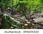 Spring Forest Stream.