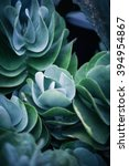 rustic macro shot of cactus  ... | Shutterstock . vector #394954867
