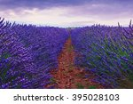 beautiful colors purple... | Shutterstock . vector #395028103
