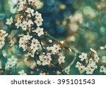 Blossom Tree Over Nature Bokeh...