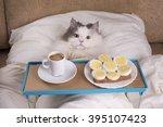 Fluffy Cat Got Breakfast In Bed