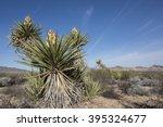 Mojave Yucca Plant In Joshua...