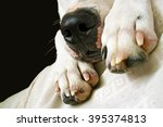close up of a dog's nose | Shutterstock . vector #395374813