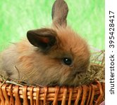 Small photo of fluffy Bunny