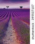 beautiful colors purple... | Shutterstock . vector #395537107