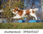 happy cavalier king charles... | Shutterstock . vector #395645167