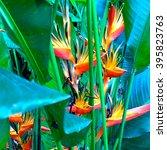 Flowering Heliconia Flowers...
