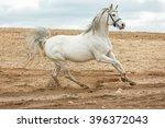 arabian stallion running at a... | Shutterstock . vector #396372043