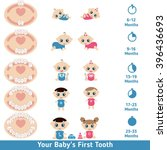 temporary teeth   names  groups ... | Shutterstock .eps vector #396436693