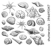 collection of sea shells... | Shutterstock .eps vector #396695347
