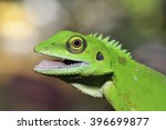 Lizard With Open Mouth