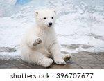 little polar bear sits like a... | Shutterstock . vector #396707677