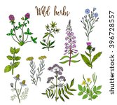wild herbs color set isolated... | Shutterstock .eps vector #396728557