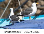 A Pair Of Seagulls  Loreto ...
