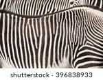 Patterns On The Skin Of Zebras