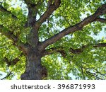 green leaf tree branches in a... | Shutterstock . vector #396871993
