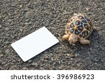 turtle on asphalt  road with... | Shutterstock . vector #396986923