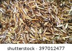 Small photo of Rice hulls are the left over product from the rice milling to get the grain we eat. Hulls are used as a soil amendment in farming and gardening. Composted rice hulls will turn dark brown or black.