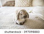 Stock photo rabbit 397098883