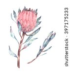 Watercolor Isolated Flower Kin...
