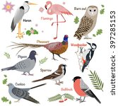 realistic birds collection.... | Shutterstock .eps vector #397285153