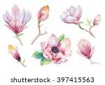 Watercolor Painting Magnolia...